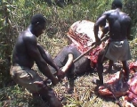 <h5>Elephant Poaching - Killed For Their Tusks</h5><p>Two African poachers struggle to remove an elephant tusk from an elephant they just killed.</p>