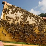A bad year for bees