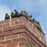 Birds Invade Home Through Chimney