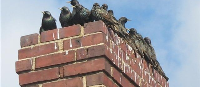 Birds Invade Home Through Chimney