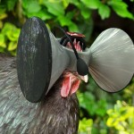 VR Headsets For Chickens
