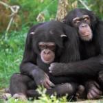 The evolutionary roots of monogamy