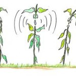Can plants talk to each other? Possibly!!