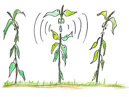 Can plants talk to each other?