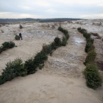 Dunes from Christmas trees
