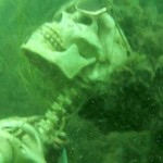 Snorkeler Mistakes Fake Skeletons for Real Human Remains, Sends Authorities on Hunt