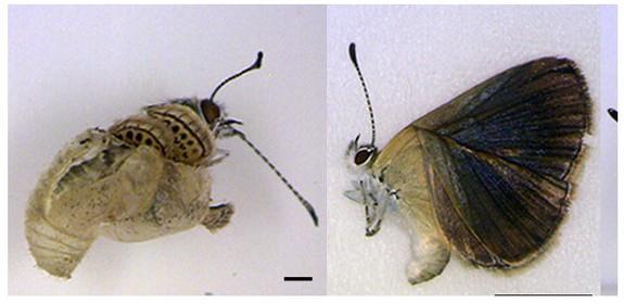 Mutant Butterflies
