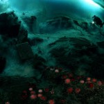 Life abounds under Antarctic ice