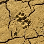 Megadrought may grip the Southwest