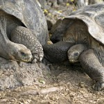 Shell Shocking Breakup After 115 Years Together