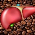 Coffee limits liver damage