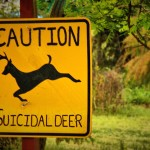 'Suicidal deer' sign making Illinois drivers take notice