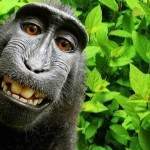 U.S. judge says monkey cannot own copyright to selfie