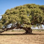 Carbon rise keeps water in drylands