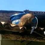 Drunk Monkey Attacks Patrons With Knife