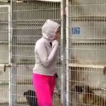 This Woman Couldn't Decide Which Dogs To Save, So She Bought The Entire Shelter