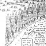 Cartoon – Avenue Of The Giants