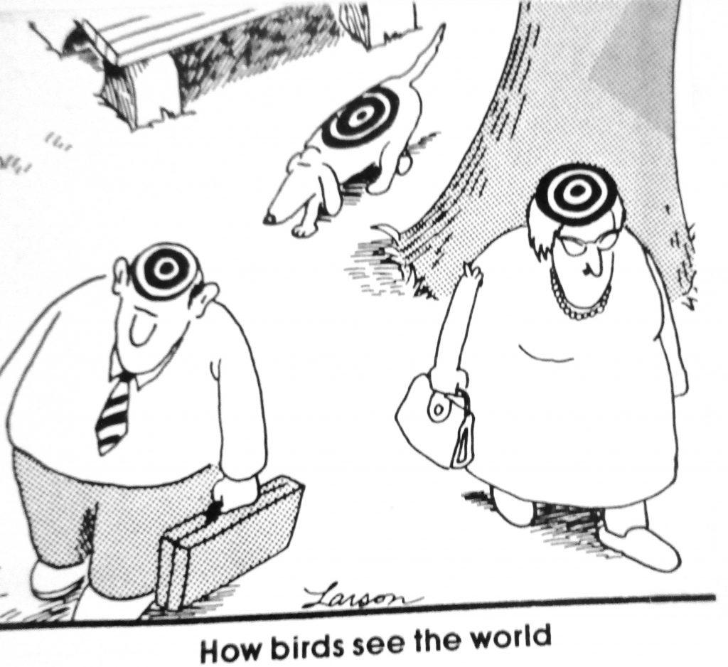 Cartoon How Birds See The World