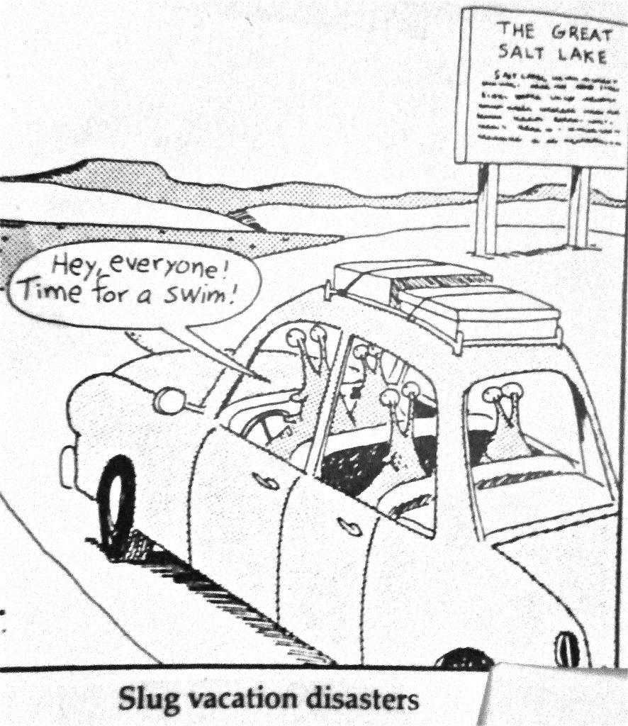 Cartoon Slug Vacation Disasters