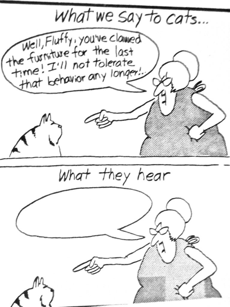 Cartoon What We Say To Cat What They Here