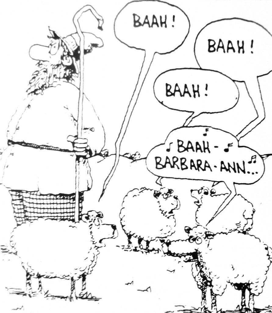 Cartoon sheeps