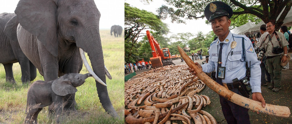 China Demand For Ivory