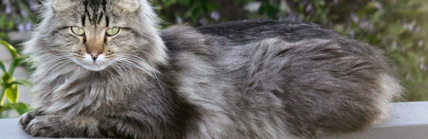 Fuzzy (Carol Bales)