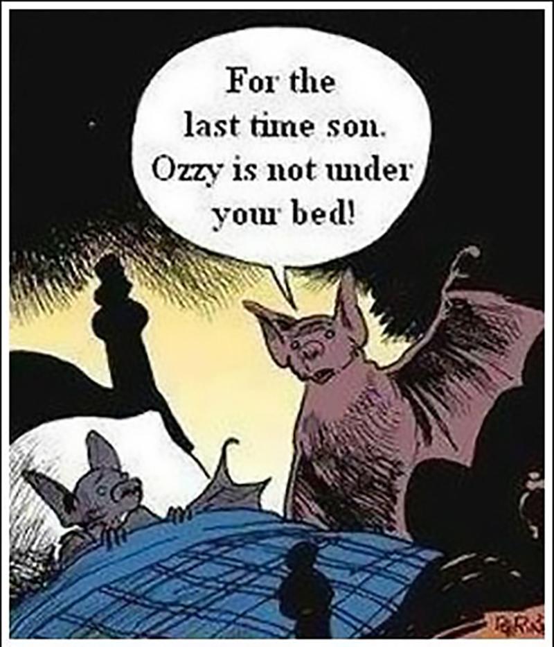 Fear of Bats