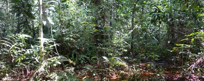 CARBON FOUND IN PEAT SWAMP IN CONGO BASIN