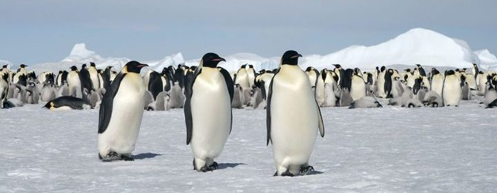 Emperor Penguins Wiped Out - Antarctic Ice Shelf