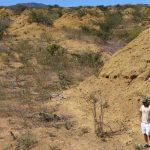 Ancient Termite Megalopolis Found in Brazil