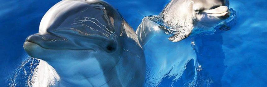 Do Dolphins Have Conversations