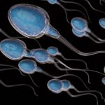 Why Is Male Fertility Declining?