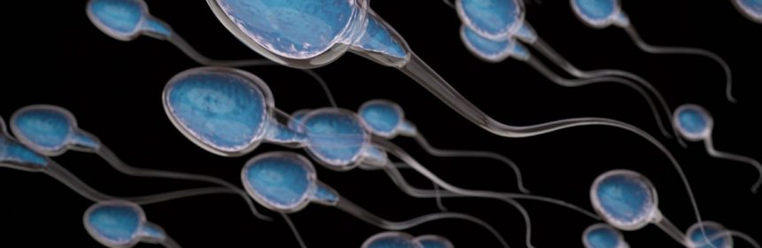 Why Is Male Fertility Declining