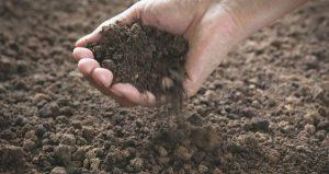 Irish Healing Soil