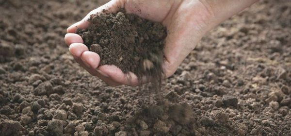 Irish Healing Soil