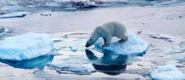 Global Warming: Arctic and Antarctica
