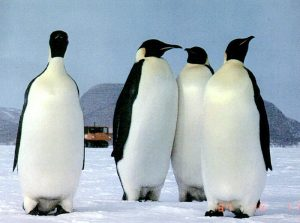 Life of Penguins