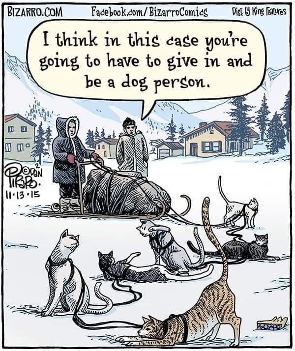Reality check for cat people