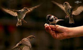 Missing Feeding of the Birds
